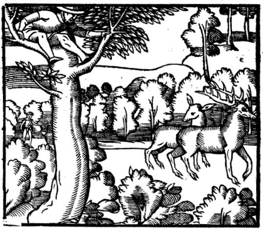 du Fouilloux, Jacques, La Venerie (Poitiers, 1562), p. 94